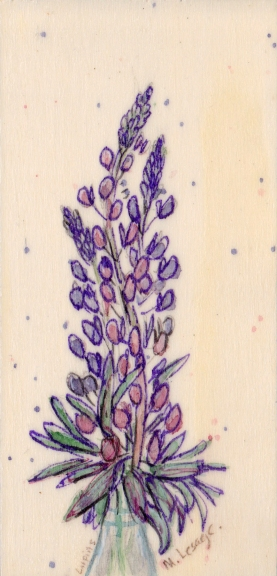 Lupins, SOLD